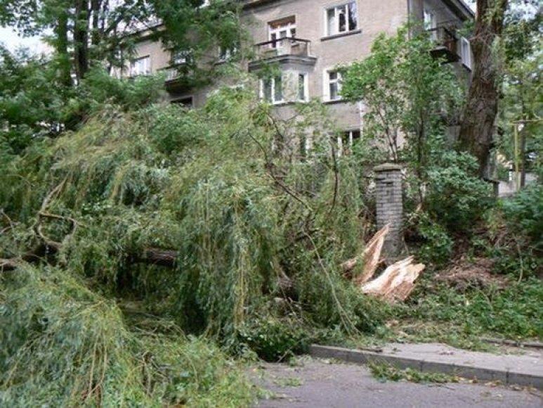 Išvartyti medžiai Kaune