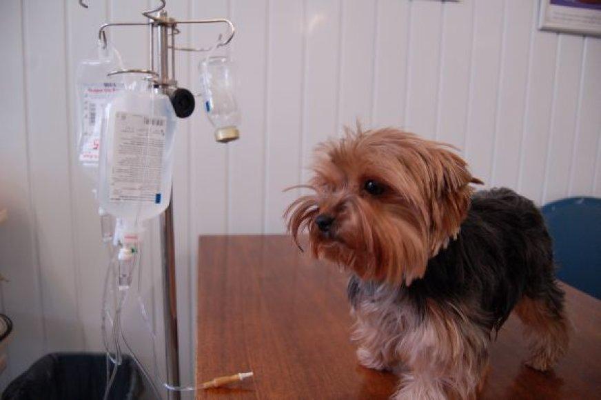 Pasikeitus gyvūnų registratoriui, vilniečiai savo augintinius pažymėti, užregistruoti ar išregistruoti gali 18-oje veterinarijos gydyklų.