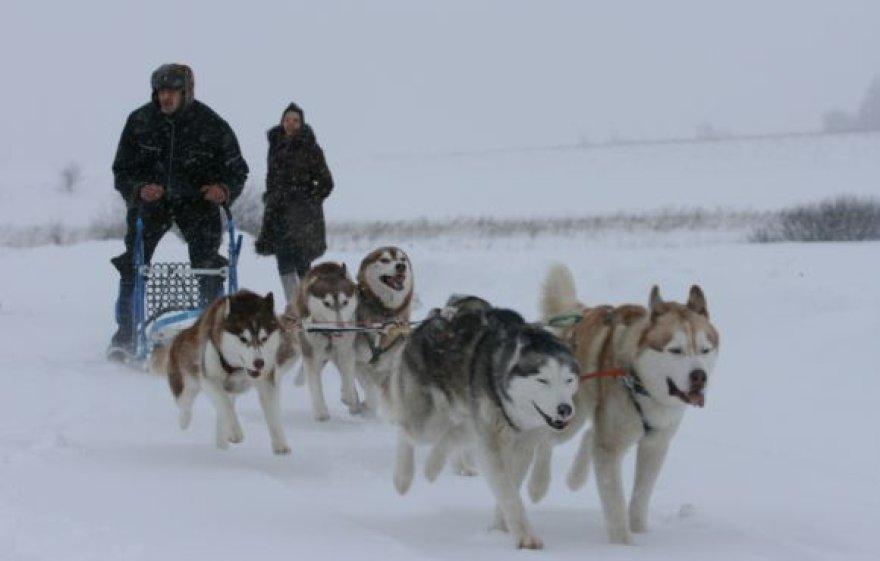 Klaipėdiečiai kviečiami į kalėdinę šventę su Sibiro haskiais.