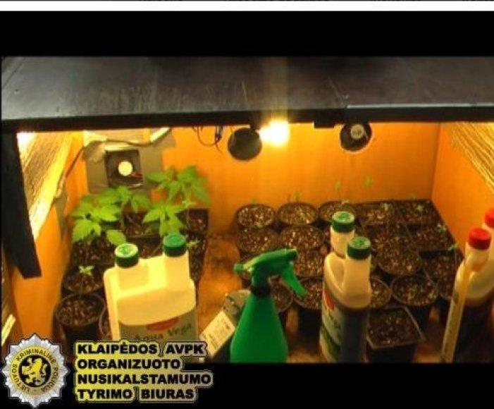 Jaunuoliai patys augino kabapes.