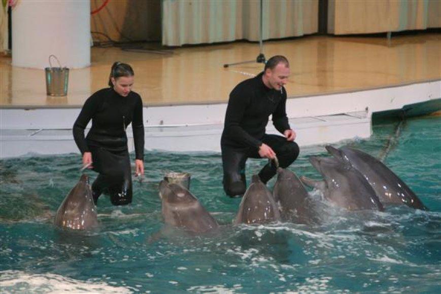 Delfinai gali būti apgyvendinti tik tuose plaukimo baseinuose, kurių gylis siekia bent 2 metrus. Tuo tarpu norint rengti šių gyvūnų pasirodymus, baseinai turi būti bent du kartus gilesni.