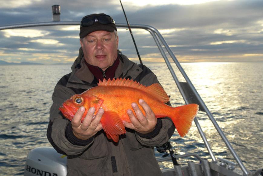 Stambūs jūros ešeriai susigundo ne tik žuviena, bet ir dideliais guminukais