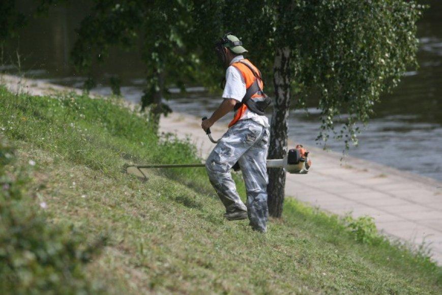 Vilniaus vadovai tikisi, kad atsiras mokančių ir norinčių pagelbėti šienaujant žolę.