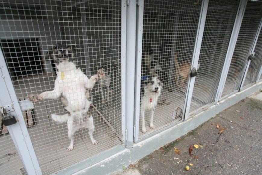 Gyvūnų globėjai tvirtina, kad uždrausti šunims loti yra neįmanoma – jeigu loja vienas, los ir kiti šunys.