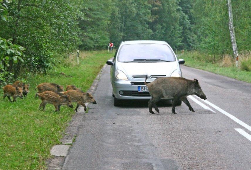 Pasak specialistų, patikimiausias būdas išvengti susidūrimo su laukiniais žvėrimis – laikytis saugaus greičio.