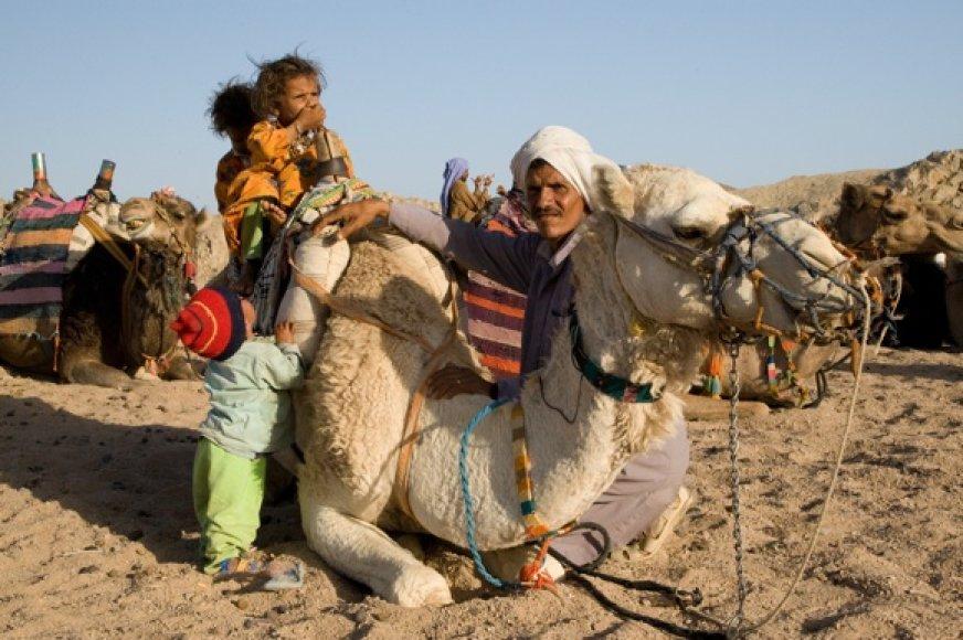 Pagrindinis Hurgados beduinų pajamų šaltinis - turistus tampantis kupranugaris