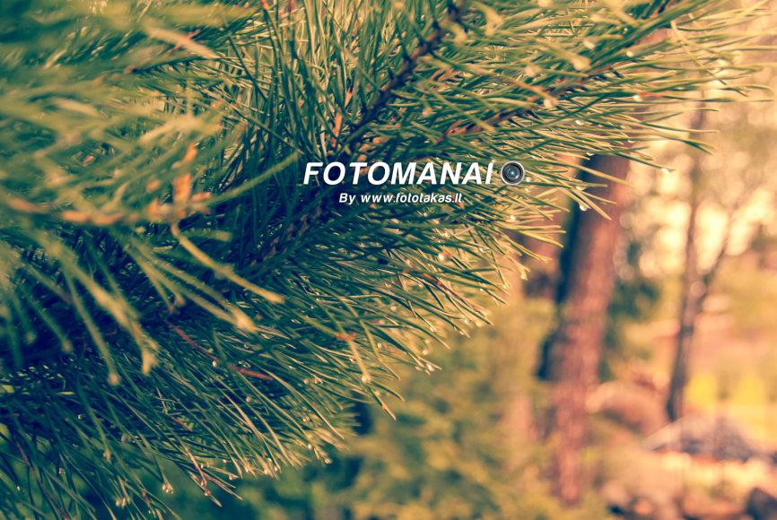 © Fotomanai
