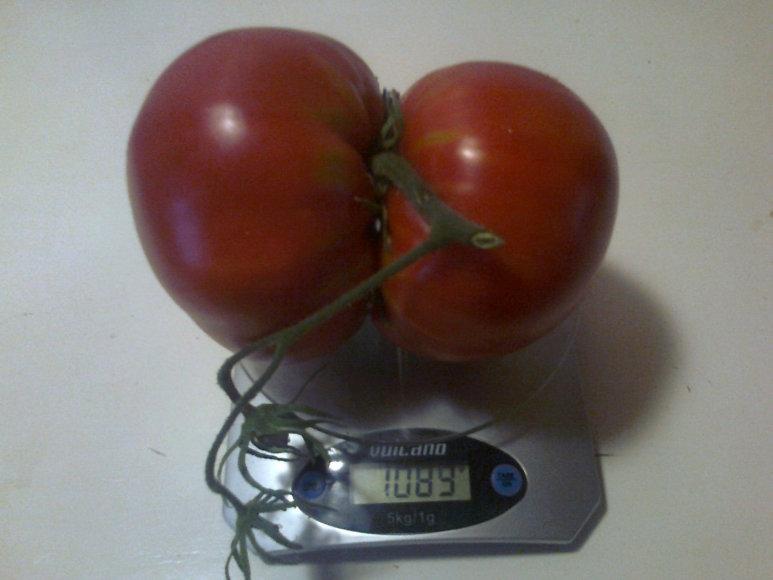 Pomidorai – Siamo dvyniai