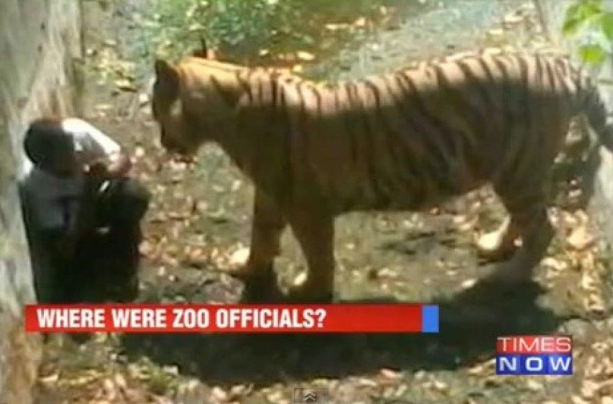 Tigro ataka