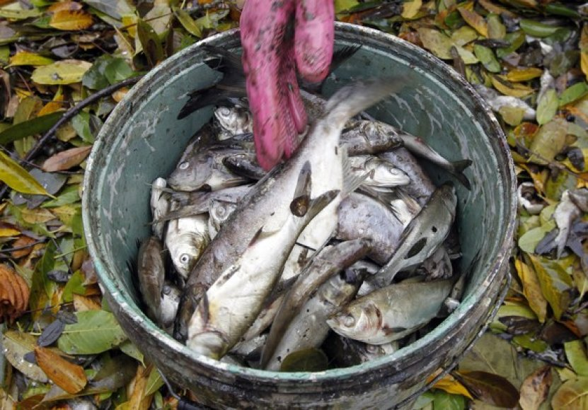 Nugaišusios žuvys