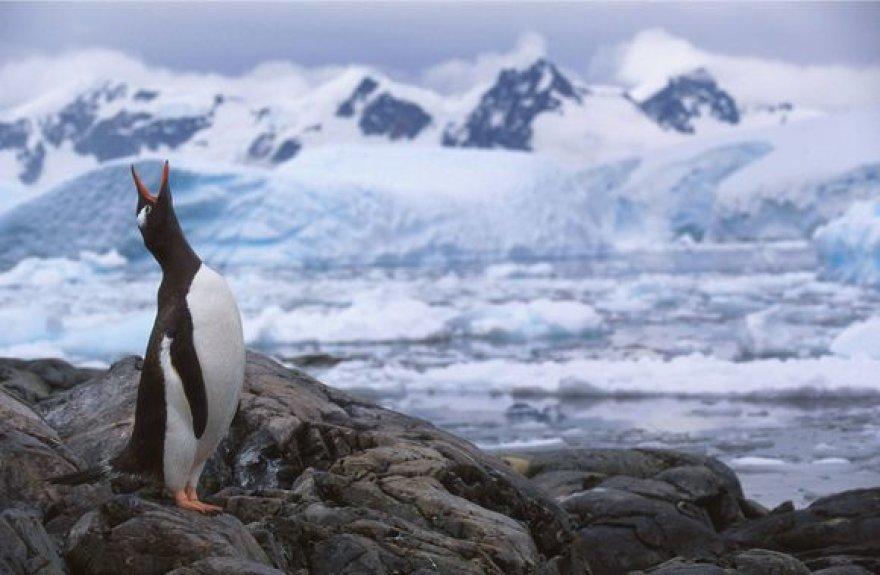 Antarktidos gyventojas