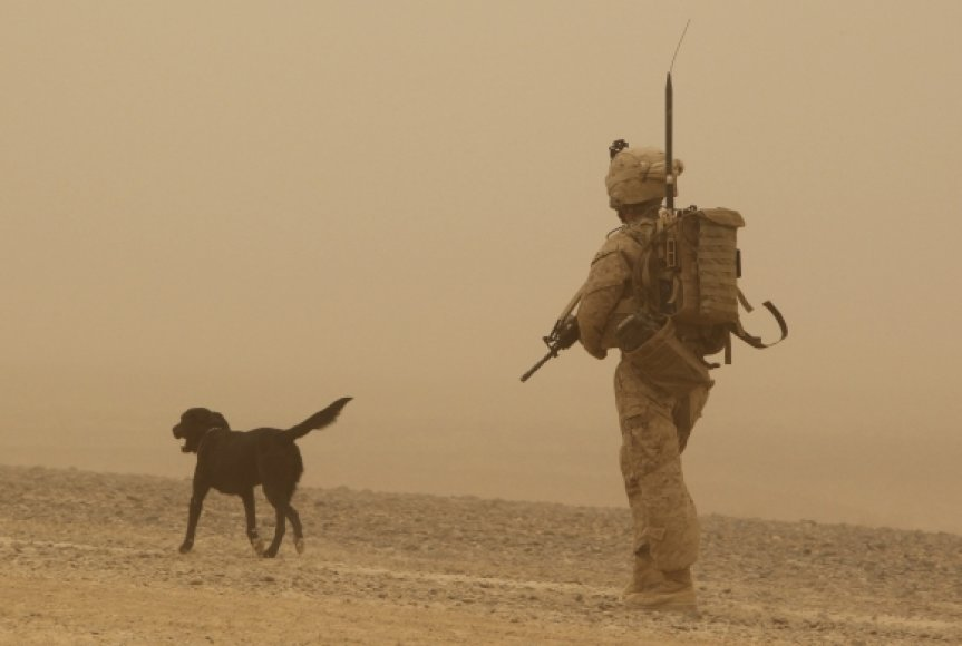 JAV karys su tarnybiniu šunimi Afganistane, Helmando provincijoje