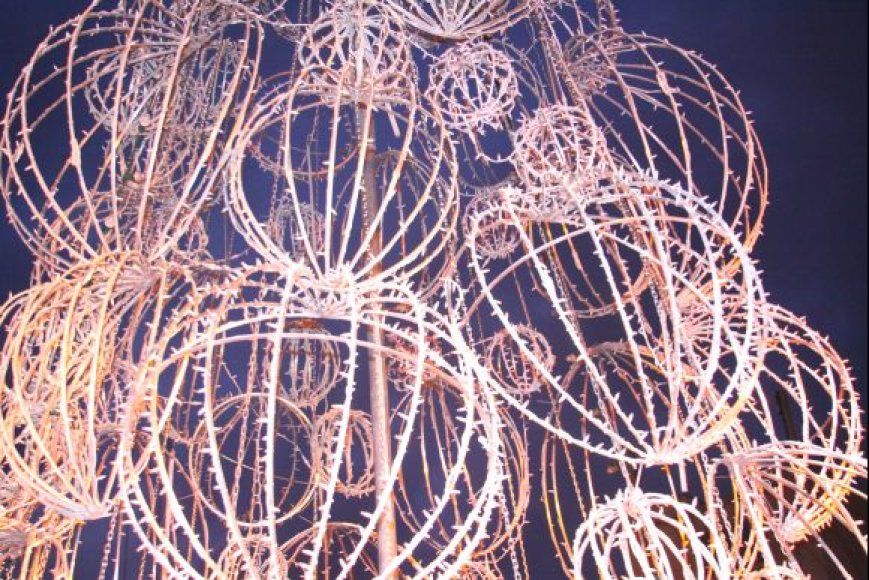 Palangos eglė iš Led lempučių yra vienintelė tokia Lietuvos miestuose.