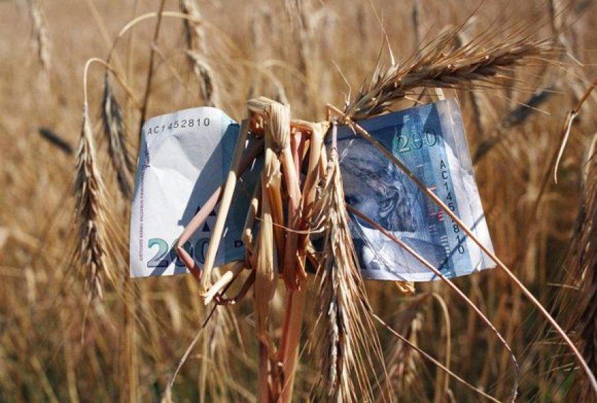 Lietuvoje nuimtas rekordinis grūdų derlius.