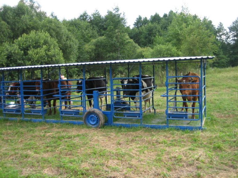Lauke laikomi gyvuliai rečiau pasigauna infekcijas
