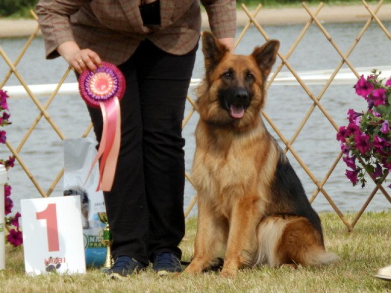 Šunų parodos akimirkos Rusnėje