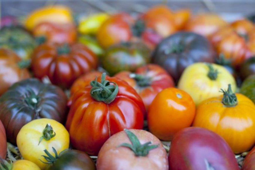Įvairiaspalviai pomidorai