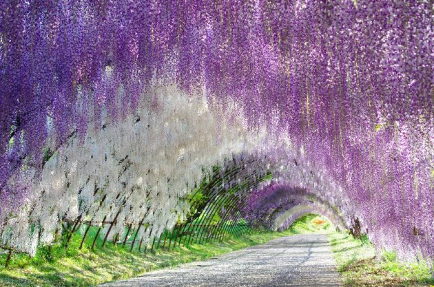 Žiedų tunelis, Japonija