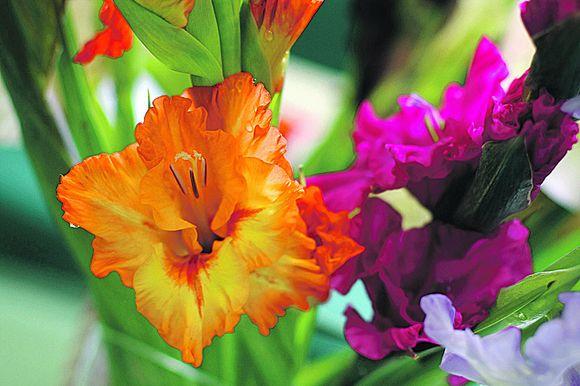 Rudenininės gėlės