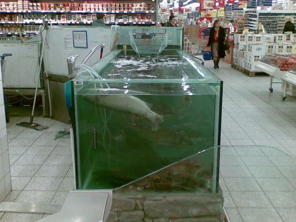 Sostinės prekybos centrai teigia besilaikiantys reikalavimų gyvų žuvų priežiūrai, tačiau centruose  pasitaiko ir tokių vaizdų.