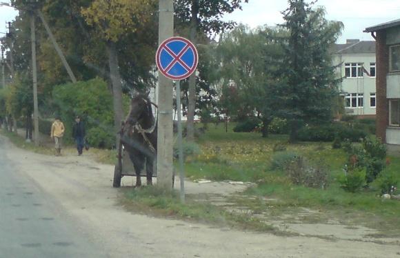 Fotopolicija: arklys po ženklu