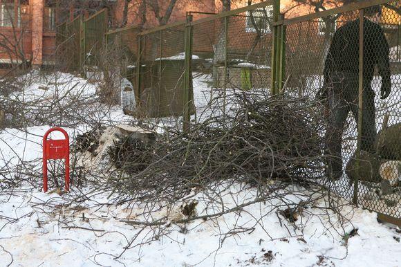 Nukirstas ievos medis Antakalnyje pakurstė kaimynų nesantaiką.