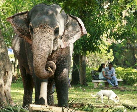 """""""Reuters""""/""""Scanpix"""" nuotr./Viešajame parke drambliai laisvai vaikšto kur panorėję."""