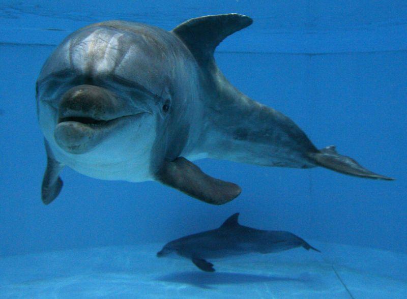 Delfinai