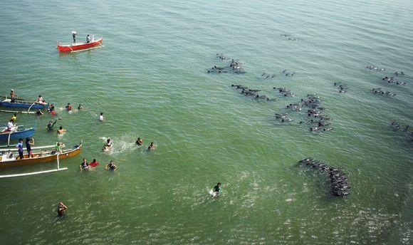 Filipinuose išgelbėta daugiau kaip 200 delfinų.