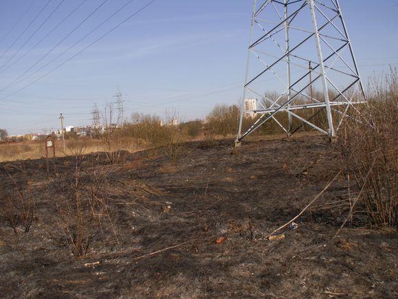 Išdegę plotai po aukštos įtampos elektros perdavimo linijomis.