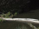 15min.lt nuotr./Boninė užtvara Rąžės upelyje