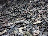 """""""Scanpix"""" nuotr./Osvencimo koncentracijos stovyklos aukų batai"""