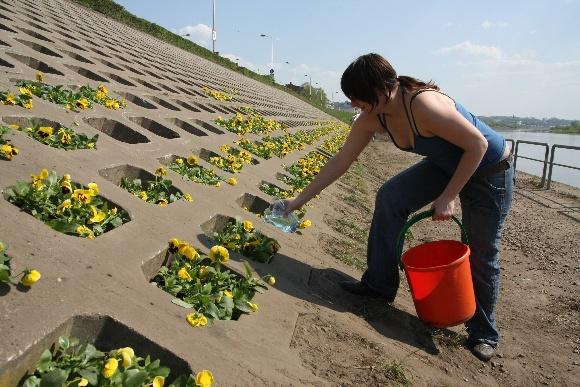 Studentai Kaune sodina gėles