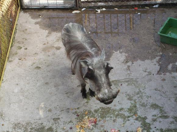 """Naujasis """"Mini zoo"""" gyventojas iš Čekijos zoologijos sodo – karpuotis."""