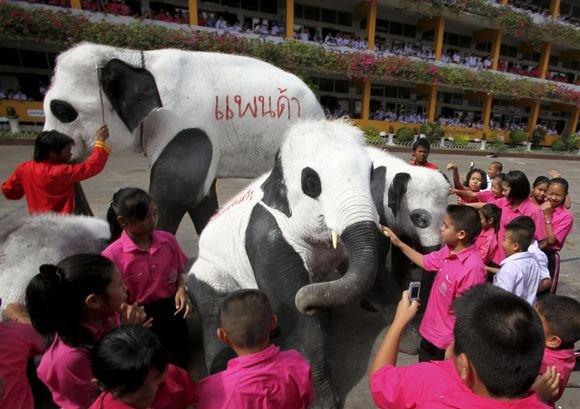 Reuters/Scanpix nuotr./Tailando zoologijos sodo darbuotojai nekenksmingais dažais nudažė dramblius kaip pandas.
