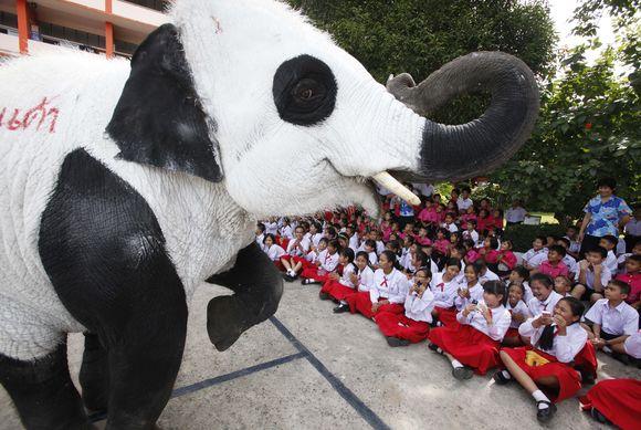 Tailando zoologijos sodo darbuotojai nekenksmingais dažais nudažė dramblius kaip pandas.