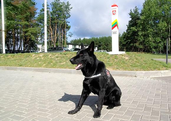 Tarnybinis pasieniečių šuo Rolfas