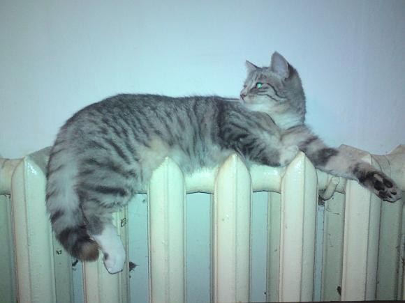 Šildymo sezonas