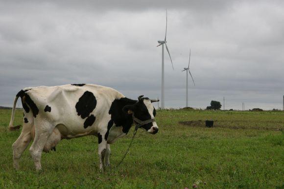 Klaipėdos rajone investuotojai nori pastatyti 18-ja jėgainių, tačiau projektas stringa.