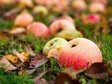 Andriaus Ufarto/BFL nuotr./Ruošdami salotas su grybais, jas pagardinti galite ir obuoliais.