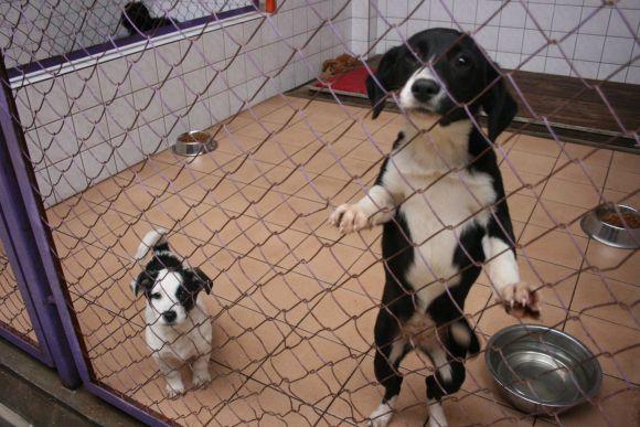 Daugelis šunelių visai jauni ir greit pritaptų naujuose namuose.