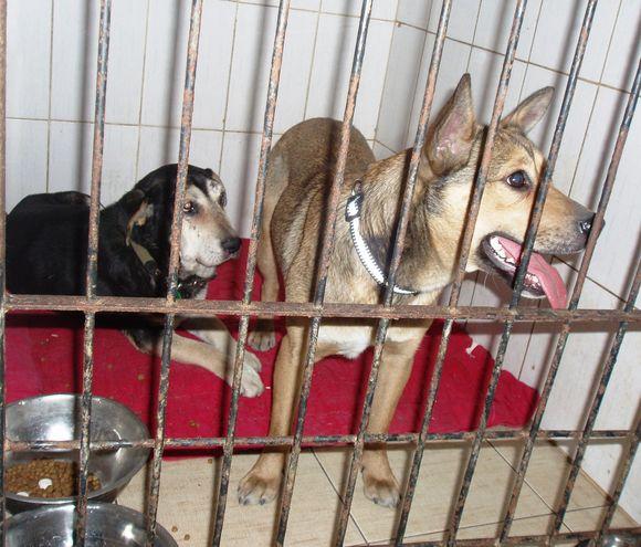 Šunelis Benas (kairėje) ir jo draugė kalytė Tina atsidūrė gyvūnų globėjų rankose.