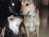 Gyvūnų globėjų asociacijos nuotr./Nuo paauglių nukentėję šuneliai šiuo metu saugūs atsidūrę gyvūnų globėjų rankose.