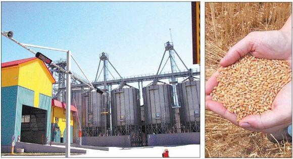 Vienų ūkininkų elevatoriai jau tušti, o kitų – dar lūžta nuo praėjusios vasaros derliaus.