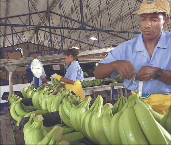 ES vartotojai nuo šiol galės mėgautis pigesniais bananais iš Lotynų Amerikos.