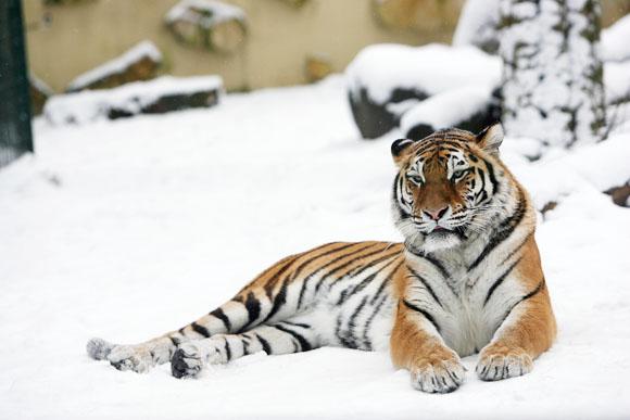 Zoologijos sodo gyventojai nebijo lietuviškos žiemos