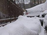J.Andiejauskaitės nuotr./Gamta sniego pridrėbė į valias.