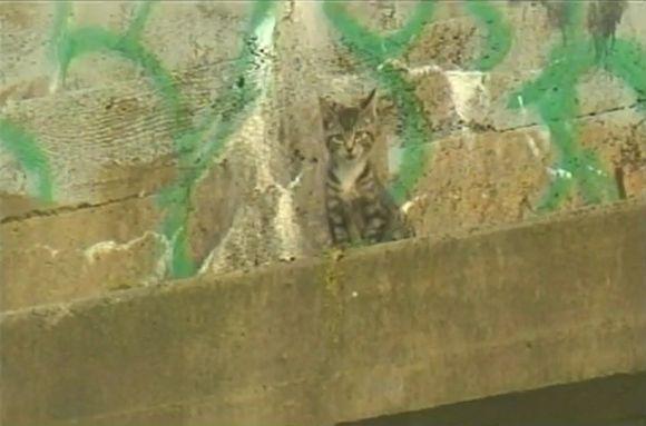 Kačiukas ant betoninės atbrailos