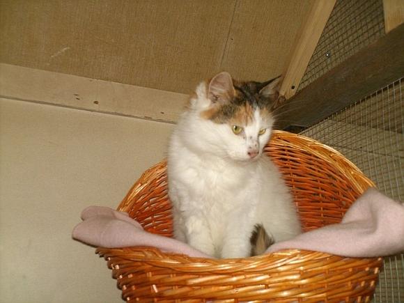 Katė Foksė