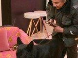 """Juliaus Kalinsko/""""15 minučių"""" nuotr./Specialiai apmokytas šuo ieško narkotinių medžiagų"""